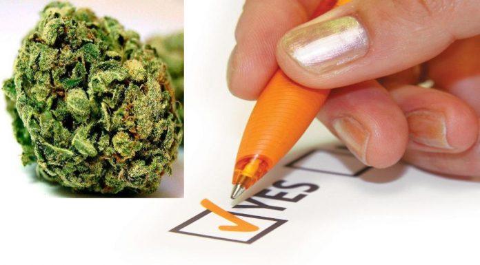 weed vote