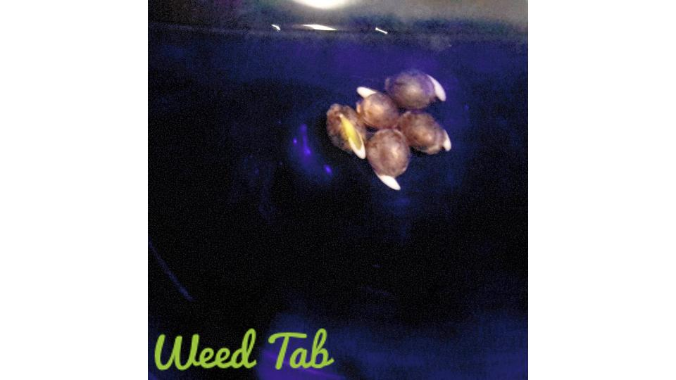 soaking seeds WT