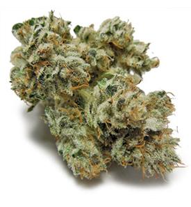 gorilla-glue-cannabis